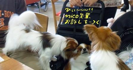 nicoせんぱ?い!!