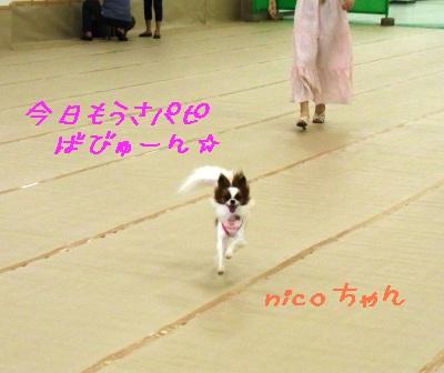 nicoちゃん