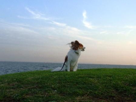 茜浜緑地の海で