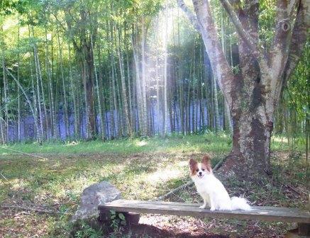 竹林で記念撮影