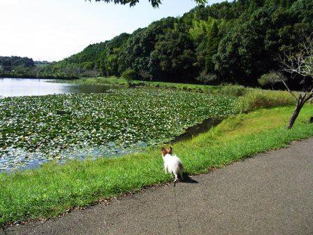 昭和の森公園池