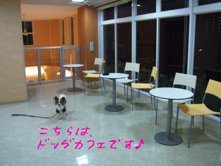 病院内ドッグカフェ