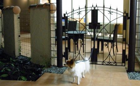 りょう動物病院2