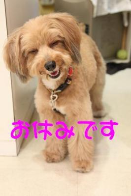 IMG_1390_20100324153458.jpg