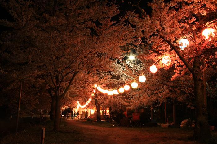妙見夜桜,4
