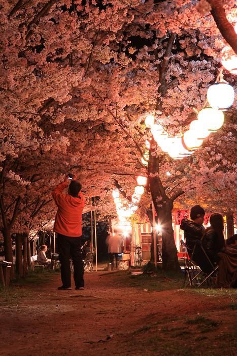 妙見夜桜、5