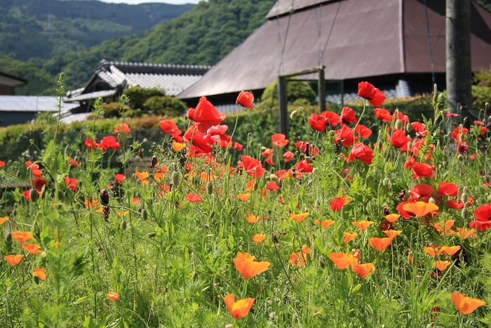 京都府笠置町、2