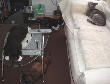 all_cats.jpg