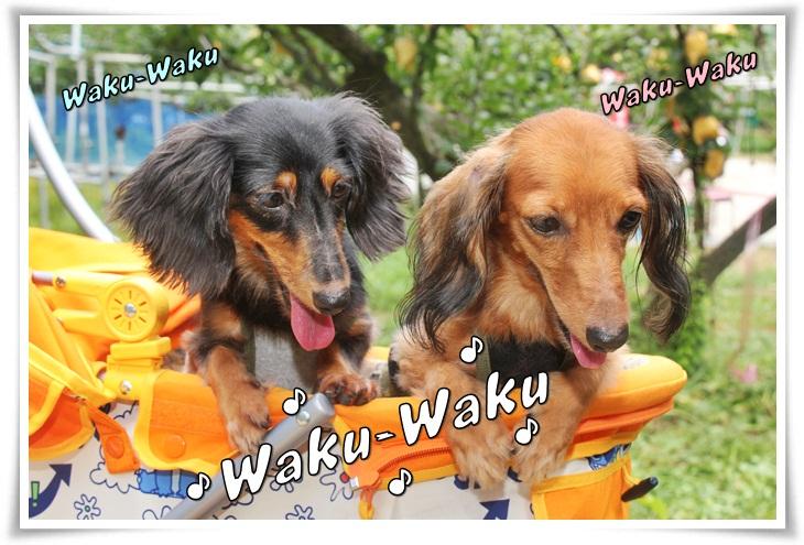 Waku-Waku.jpg