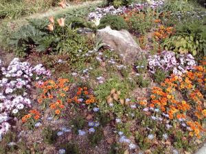 長居公園 植物園(自然博物館近くの花:その1)