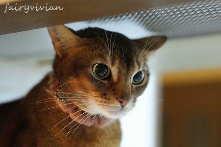 vivian120305 1