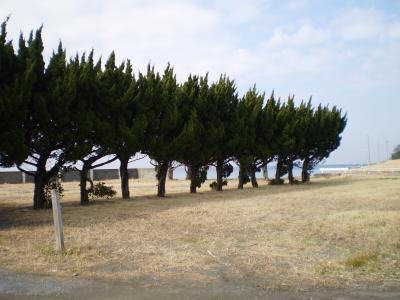 絵のような木