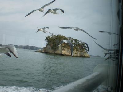 カモメと島