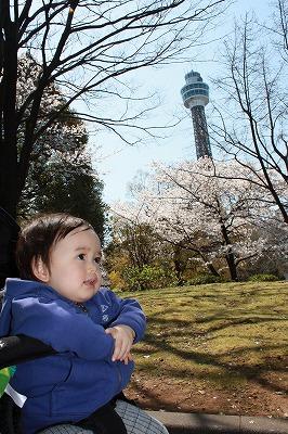 Tohwaと桜とマリンタワー