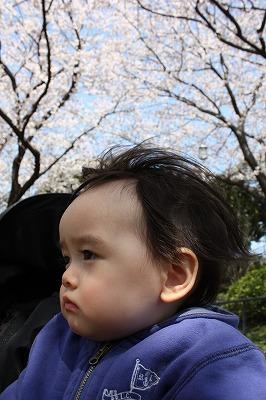 Tohwaと桜