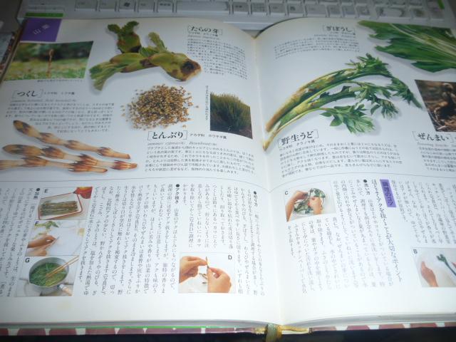 春野菜 006