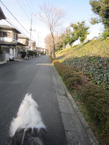 愉しみな散歩道