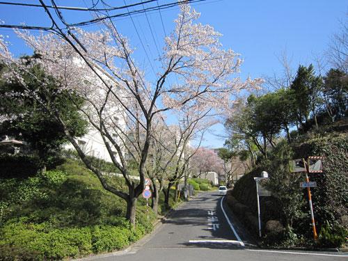 幼稚園への坂道
