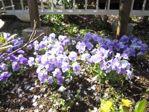 幼稚園の花壇
