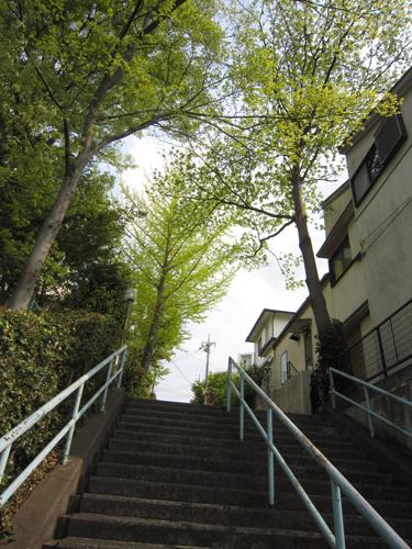 椿峰の階段