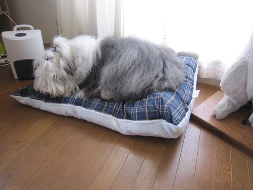 お布団ベッド