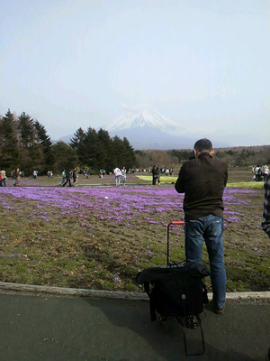 一分咲きの芝桜と富士山