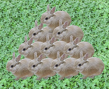 10 fawns