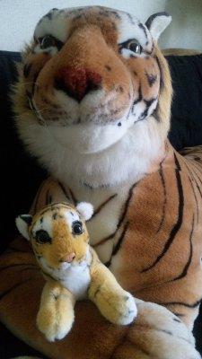 トラ子と大雅