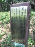 鎌倉道脇道