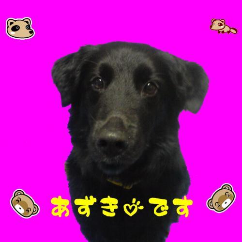 azuki20120419f.jpg