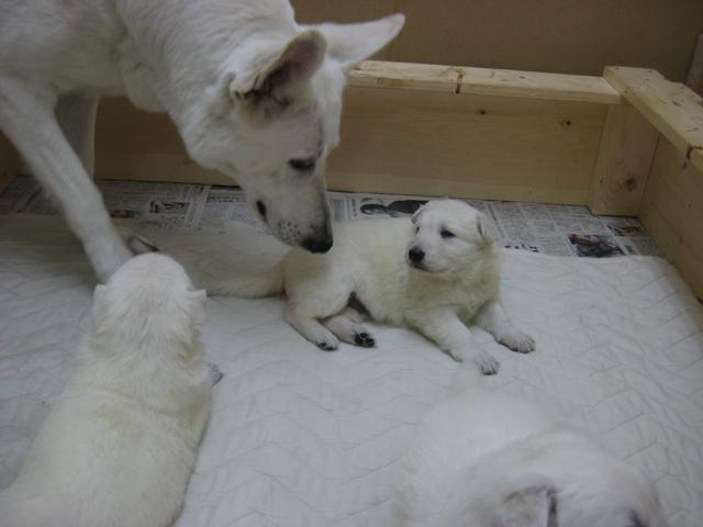 2012.2.1ローダー子犬1
