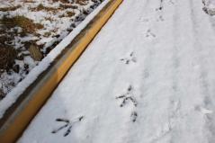 サギの足跡