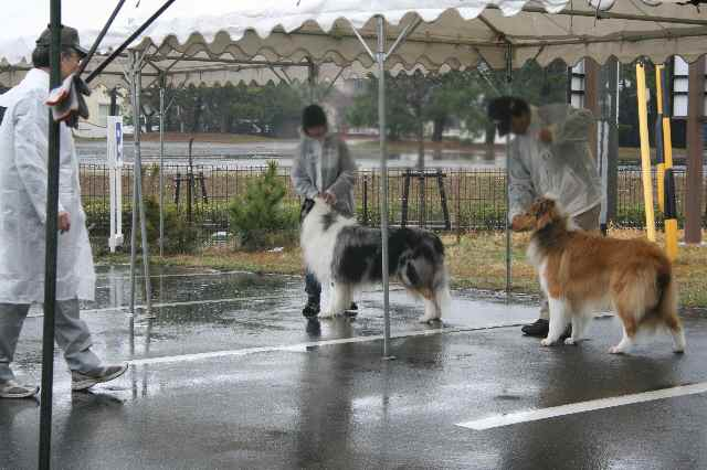 ZEROの静岡展 ・・・大雨?