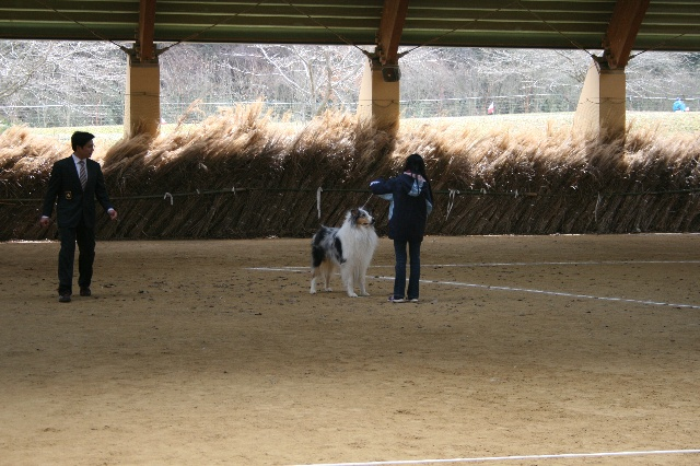 オープンクラス・成犬は2頭!