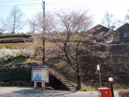 桜前線Ⅵ-3