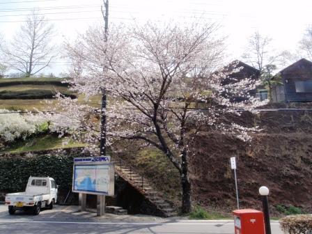 桜前線Ⅶ-3
