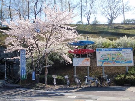 桜前線Ⅷ-2