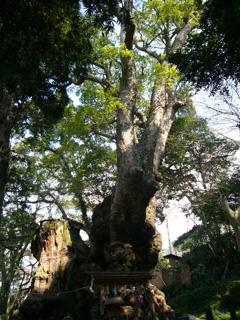 20080327来宮、伊豆山神社4