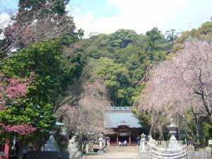 20080327来宮、伊豆山神社10