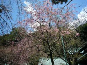 20080327来宮、伊豆山神社15