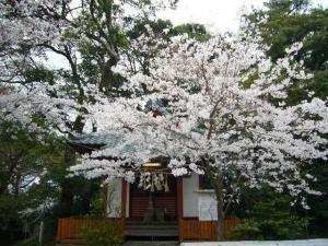 20080330玉前神社、天津神明社7