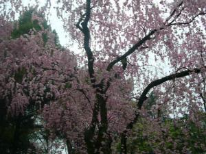 京都vol.2-7