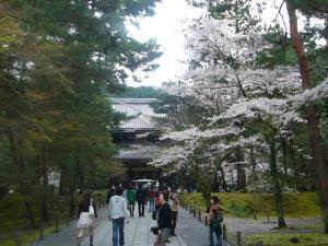 京都vol.1(2008年4月8日)2