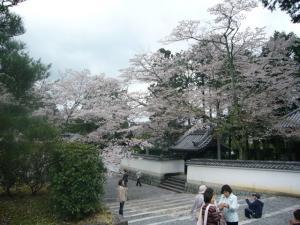 京都vol.1(2008年4月8日)7