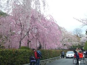 京都vol.1(2008年4月8日)8