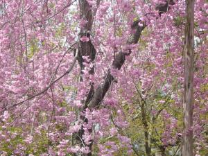 京都vol.1(2008年4月8日)9