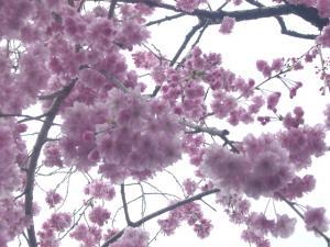 京都vol.1(2008年4月8日)10