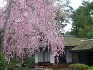 京都vol.1(2008年4月8日)11