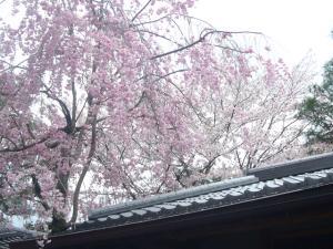 京都vol.1(2008年4月8日)12