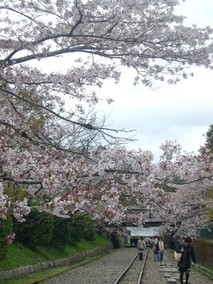 京都vol.1(2008年4月8日)13